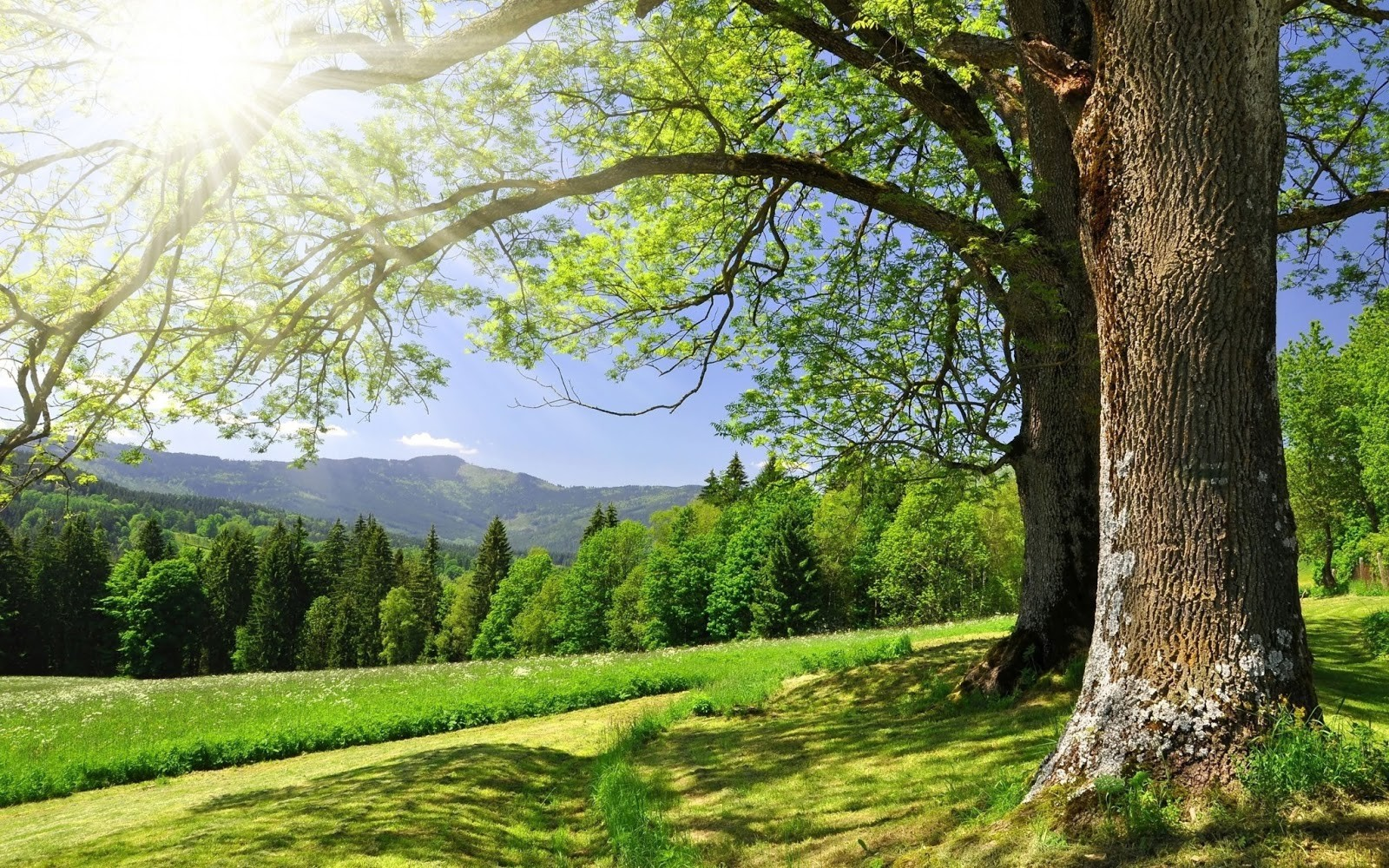 forest-trees-grass-green-summer-sun-glare-nature.jpg